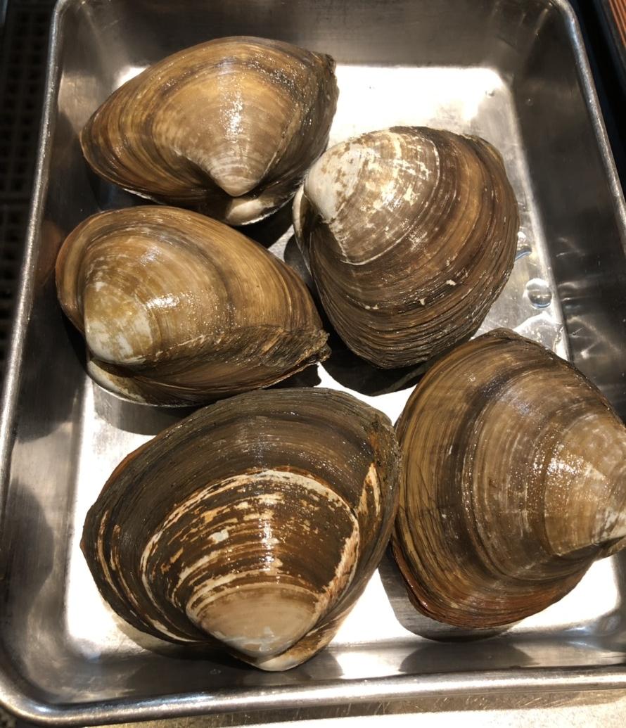 青森県産のホッキ貝