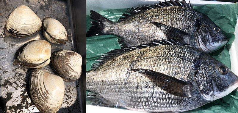 本マグロ(トロ)、黒鯛、ホッキ貝お刺身 その他…